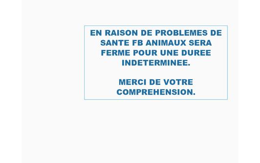 Example website FBAnimaux